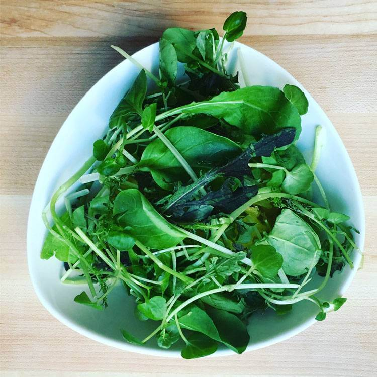 AeroFarms-Tour-and-Dream-Greens-Recipe
